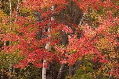 2008-10-AdirondackFall19