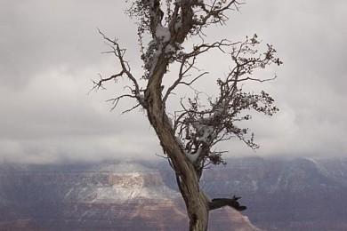 2008-3-SB-Grand-Canyon202