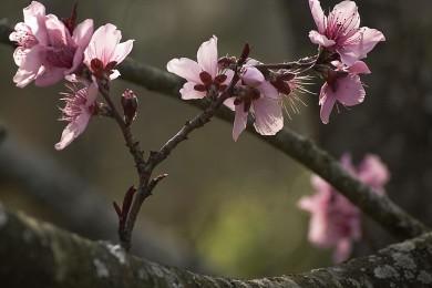 2008-3-Spring Flowers67