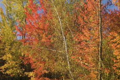 2009-10-NearWaddington11